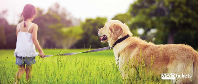 Dog outside with a girl - ASAPtickets Travel Guide   Pet Quarantine Australia