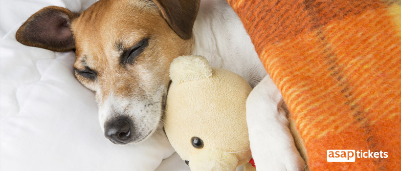 Sleeping dog with a toy - ASAPtickets Travel Guide | Pet Quarantine Australia