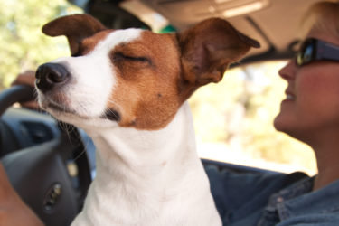 Flying with pets on an airplane - ASAP Tickets | Travel Guide