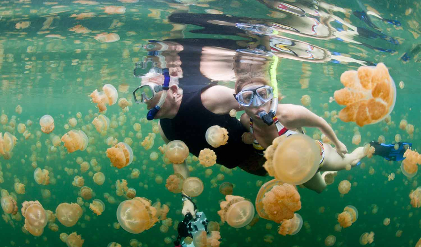 Swimming with jellyfish in Philippines - Fun Things To Do in The Philippines