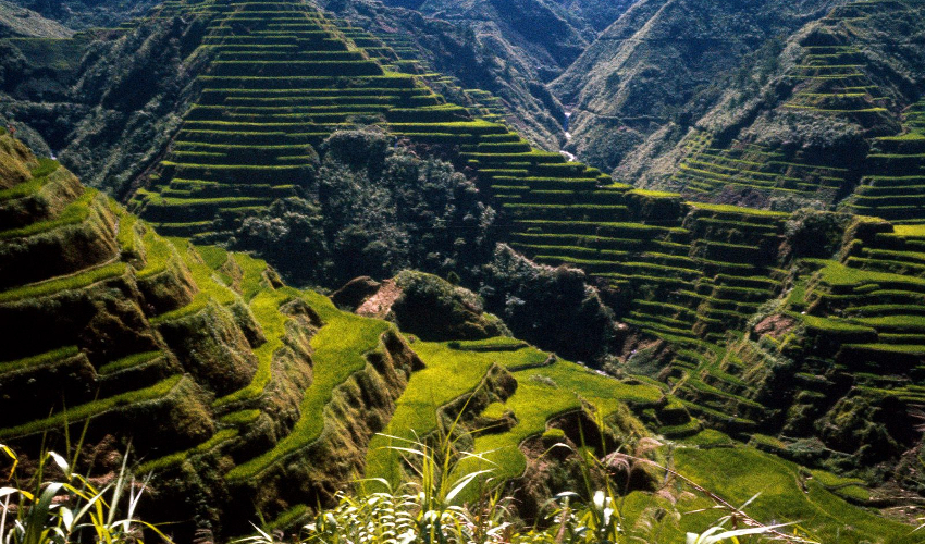 Banaue Rice Terraces in Philippines - Fun Things To Do in The Philippines