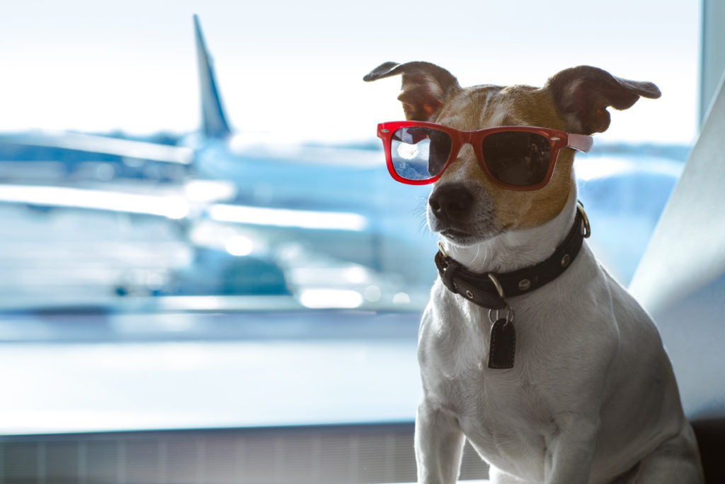 Traveling with pets - ASAP Tickets Blog