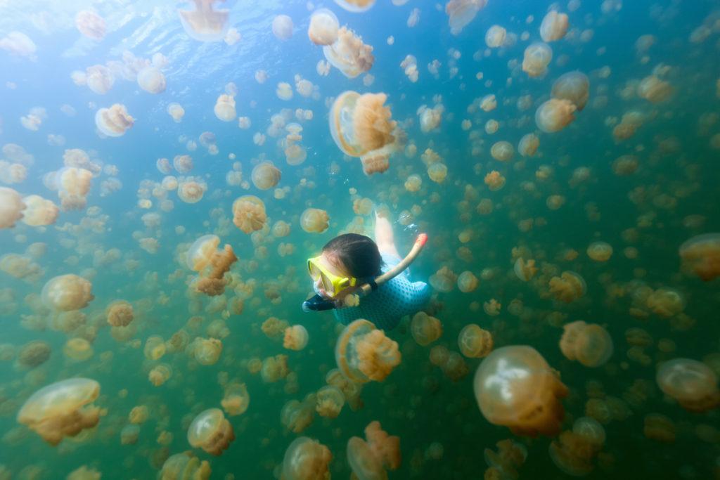Jellyfish Lake, Palau - Multi-City Trip destinations