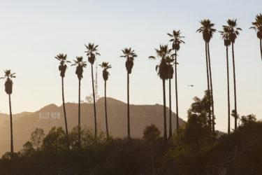 Improved Travel Experience on International LAX flights - ASAPtickets travel blog
