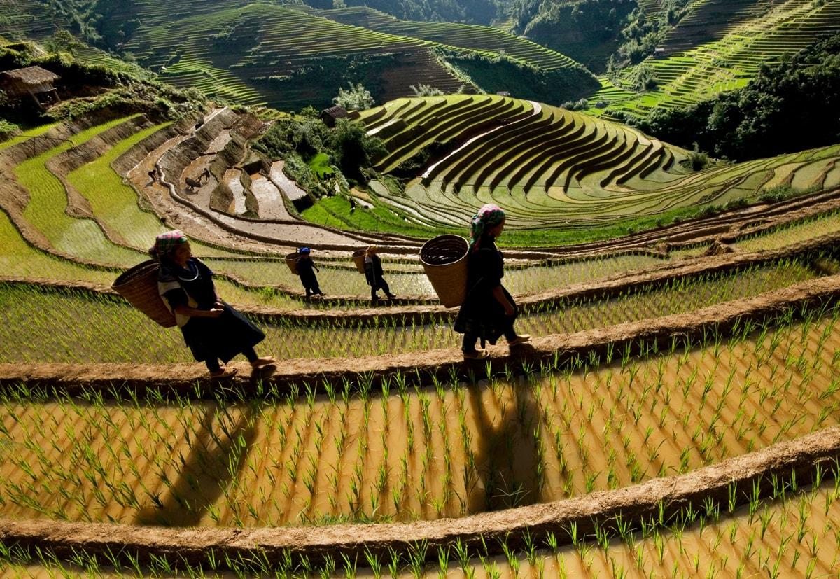 Sunset @ Mu Cang Chai   Vietnam travel, Rice terraces