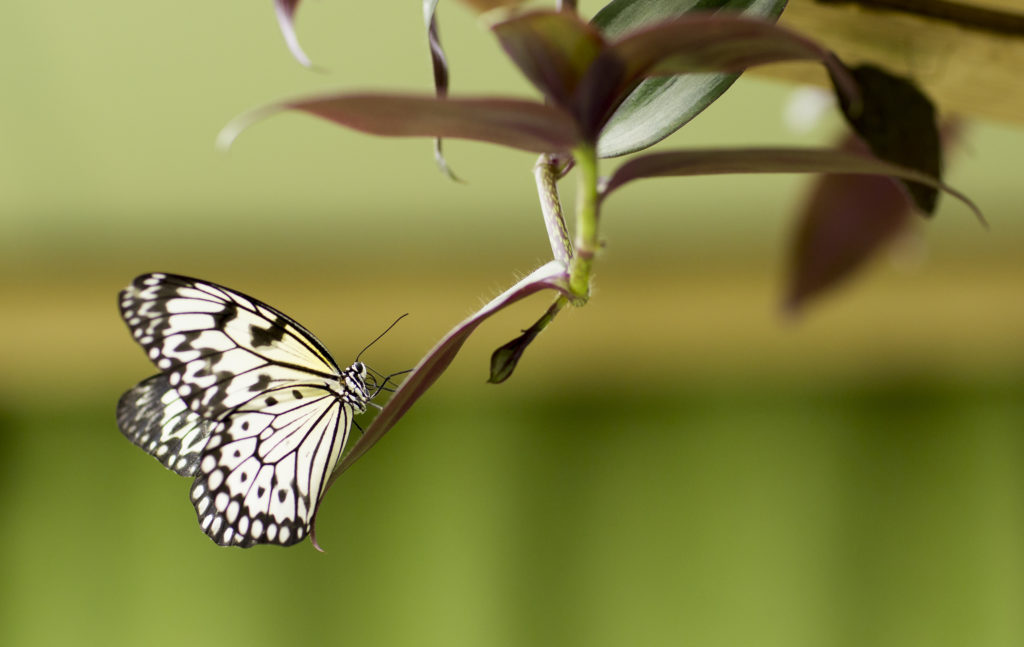 1. Nigeria Has the Largest Diversity of Butterflies - 10 Fun Facts Why You Should Travel To Nigeria, ASAP Tickets travel blog