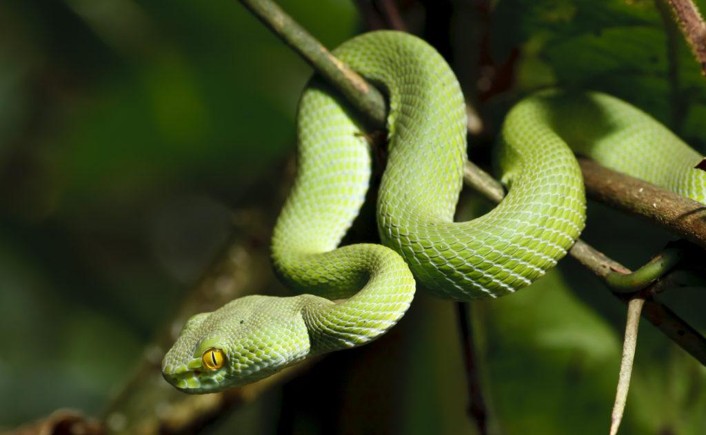 Green Tree Snake - Travel to Madagascar
