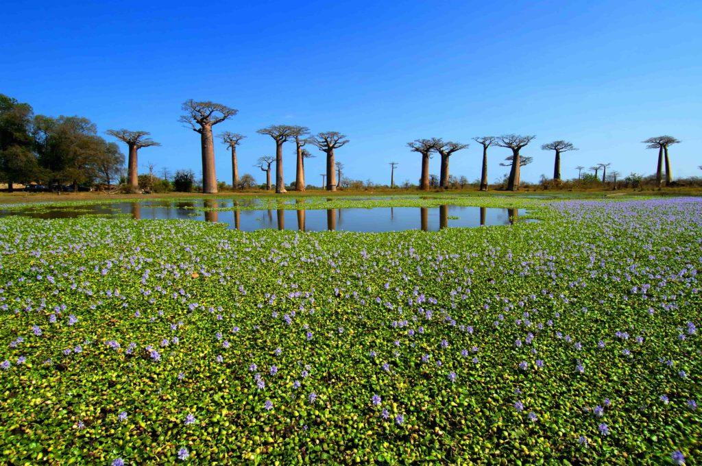 Madagascar Swamp - Travel to Madagascar