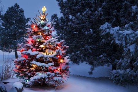 Interactive Christmas Tree Map