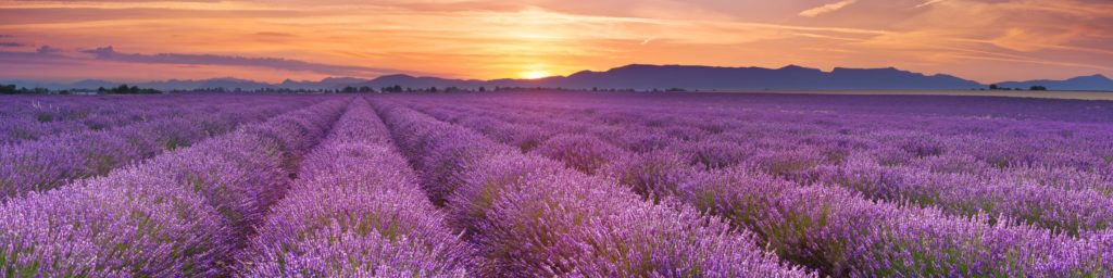 Provence Mothers Day